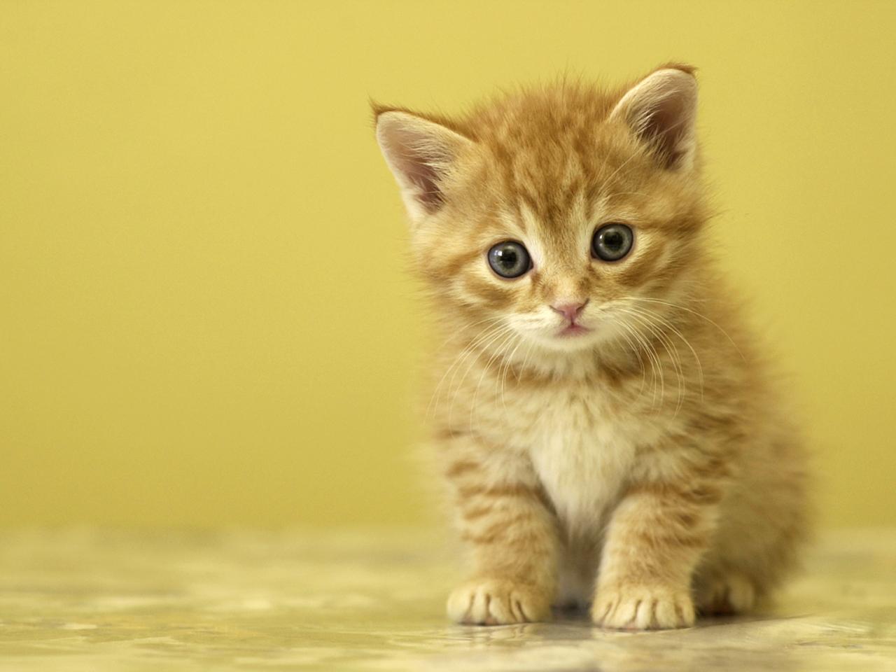 gatinho muito fofinho contas poupanÇa