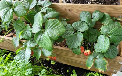 Vale a pena ter uma pequena horta em casa?